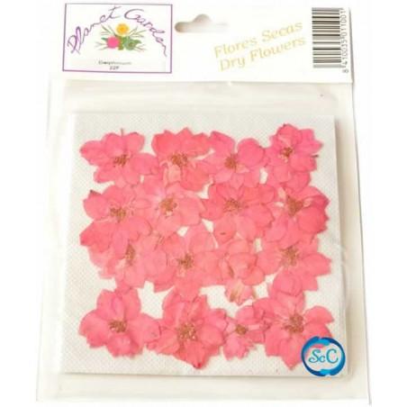 Flores naturales secas prensadas Delphinium