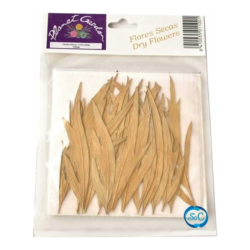 Hojas naturales secas prensadas Gravillea robusta