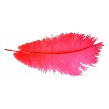 Pluma avestruz roja 40 cm