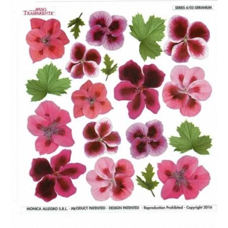 Lamina sospeso prediseñado geranium 23 x 23 cm