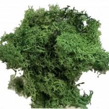 Musgo polar Verde