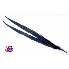 Pluma faisán azul 45 cm
