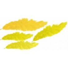 Plumas marabu Amarillas